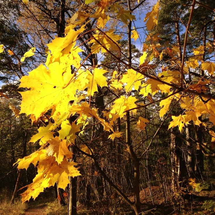 autumn leaves /Helsinki, Finland