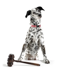 Familiarize yourself with animal cruelty statutes in your state. An associated URL is www.aspca.org/Fight-Animal-Cruelty/Advocacy-Center/state-animal-cruelty-laws.aspx.