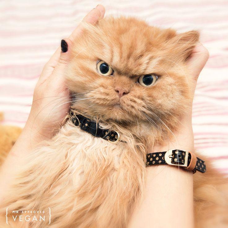 Elegantes Katzenhalsband und Freundschaftsband  Dotty Moggy: Mit der aufsehenerregenden Dotty Moggy punkten Ihre Samtpfote und Sie garantiert. Mit goldenem Punktmuster auf schwarzem Hintergrund. Die glänzende Schließe vollendet den edlen Look.
