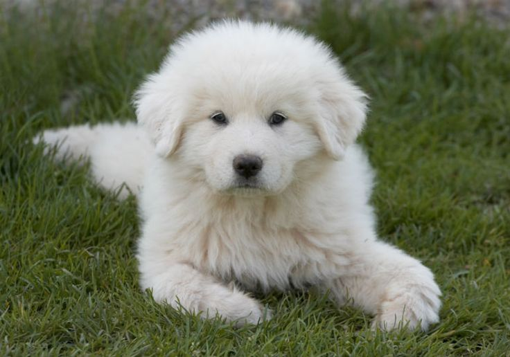 Best Guard Dogs For Females