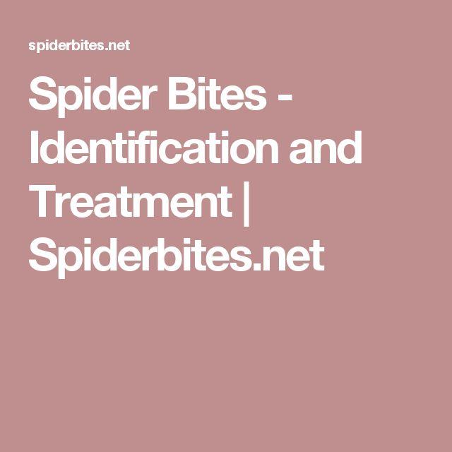 Spider Bites - Identification and Treatment | Spiderbites.net