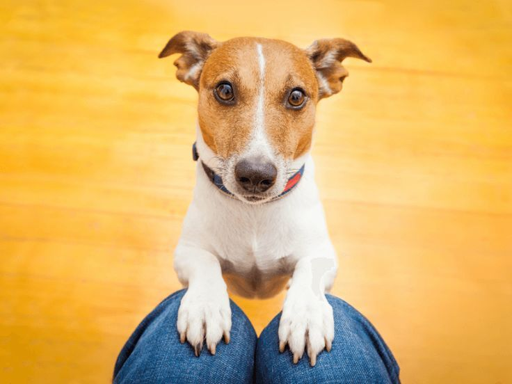 How To Stop A Dog From Jumping Up Aggressive Dog Dog Behavior Dogs