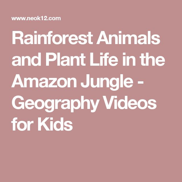 Rainforest Animals and Plant Life in the Amazon Jungle - Geography Videos for Kids