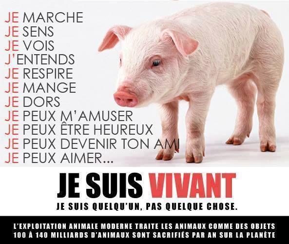 Images Vegan Friendly | VEGAN FRANCE | Portail Végan / Végétarien / Végétalien