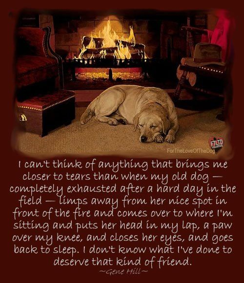 This is beautiful. So touching. #quotes #dogquotes