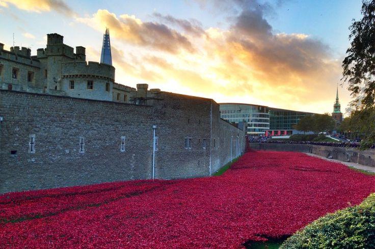 Tower of London poppies - credits Ma Che Davvero? http://machedavvero.it/2014/10/tower-of-london-mille-papaveri-rossi/