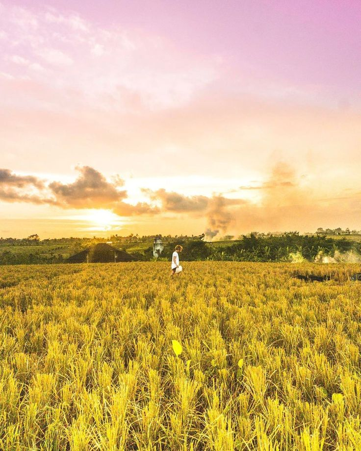 Backyards in Canggu Sunrise in the Munduk area was incredible  #bali #indonesia #holiday #vacation #backpack #backpacking #beautiful #island #canggu #sunset #ricefields #travel #traveling #blog #saltinourhair