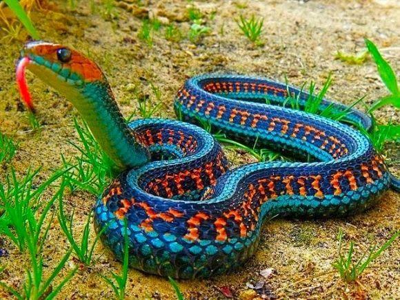Fotos De Animais Com Imagens Animais Belas Cobras