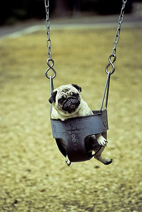 Best 25 puppy love ideas on pinterest puppies cute for Love making swing