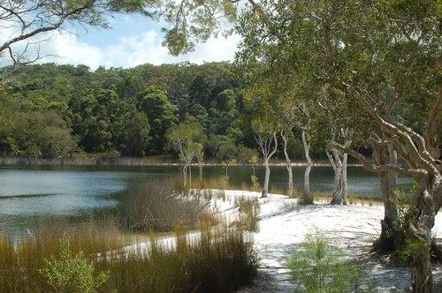 Poona Lake, Cooloola National Park QLD