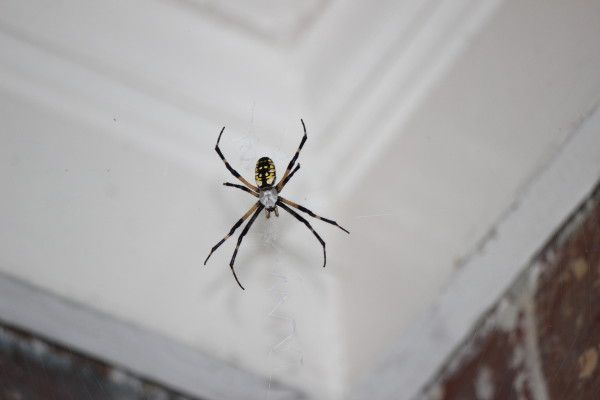 10 Natural Ways To Keep Spiders Out Of Your House!