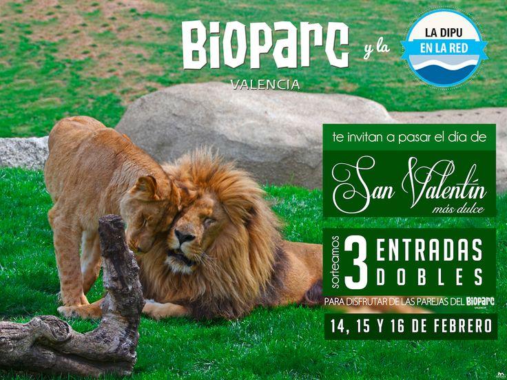 Imagen del concurso organizado por Bioparc Valencia y La Dipu en la Red con motivo de San Valentín