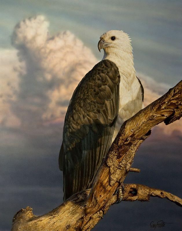 greg postle archived paintings - australian based bird painter