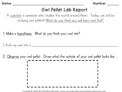 1000+ images about Owl pellet lab. on Pinterest | Owl, Food Webs ...