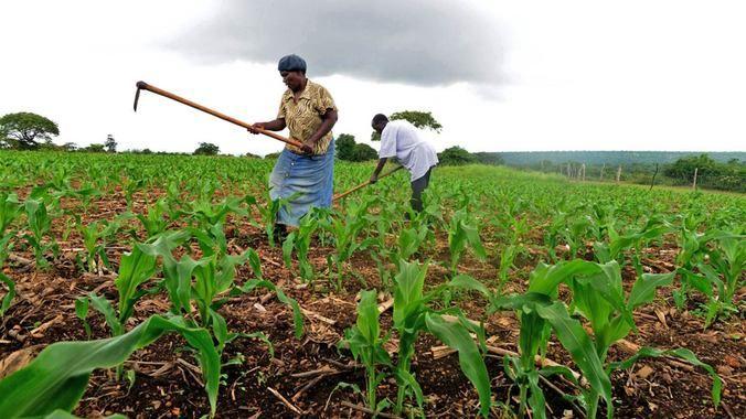 1913 Land Act: Bantustans left untransformed