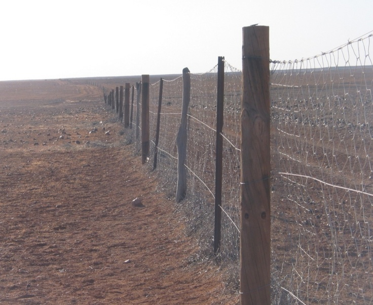 The dog fence, near the Flinders Ranges, South Australia. It runs for about 5000 km, and tried to keep dingoes out of stocked areas. Each road that crosses it goes over a cattle grid that dogs cannot cross.