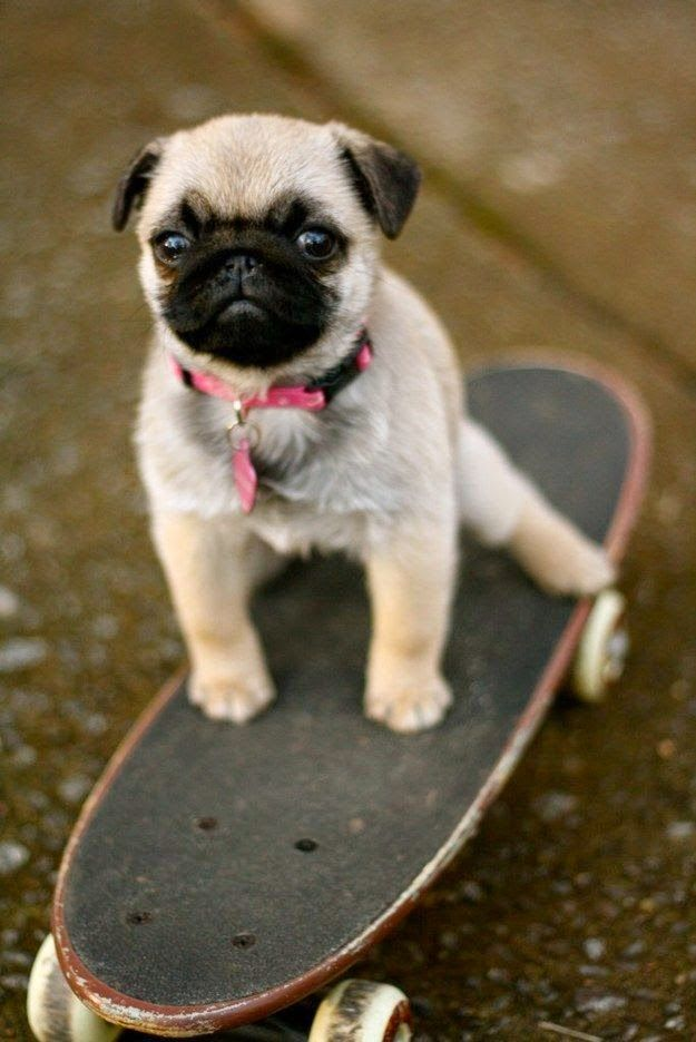 Top 5 Cutest Small Dog Breeds