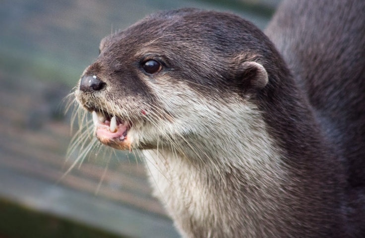 Otter - Blackpool Zoo - December 2010 - Lewis Ryan Photographer