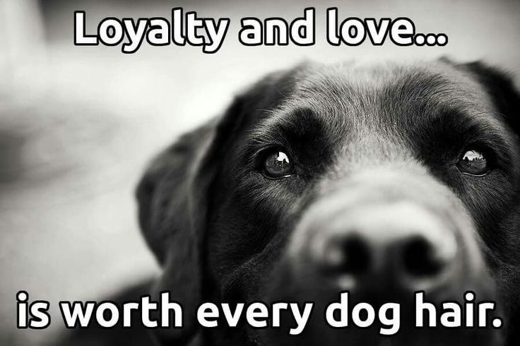 Loyalty and love...is worth every dog hair <3 - Tap the pin for the most adorable pawtastic fur baby apparel! You'll love the dog clothes and cat clothes! <3