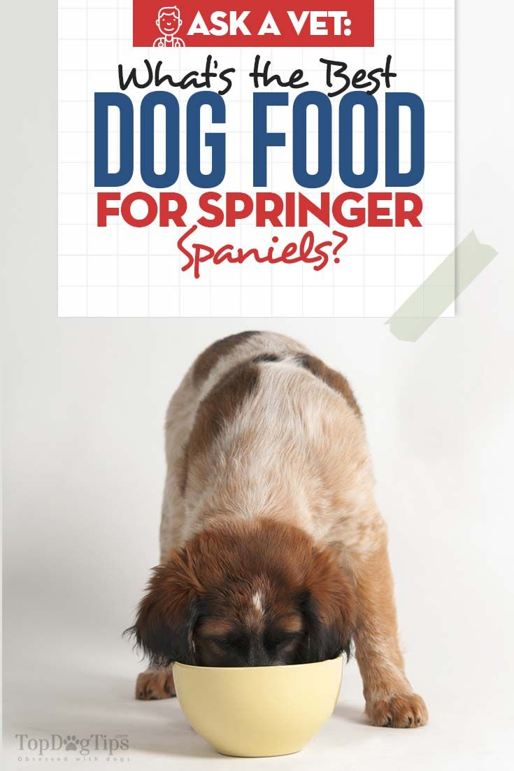9 Best Dog Foods For Springer Spaniels Best Dog Food Best Dog