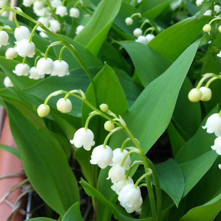5月1日は『すずらんの日』。 白いお花が可愛いですね #すずらんの日 #すずらん #鈴蘭 #東亜和裁 #toawasai