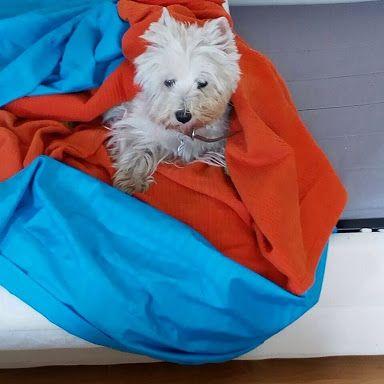 La buena de Manuela descansando en domingo nos saluda a todos los amantes de los perros y mascotas del mundo!!!!