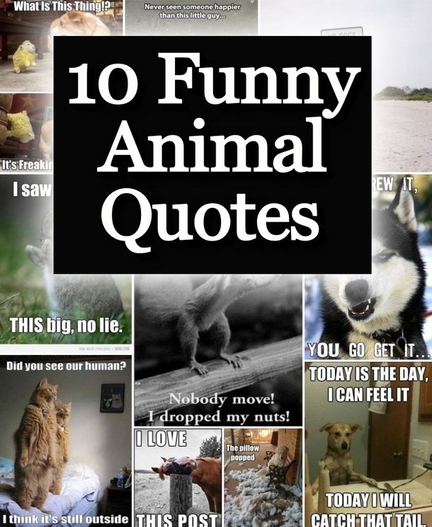 Everybody loves when a funny animal image!  We have gathered the 10 funniest animal quote images we could find. funny cute memes animals dogs cats animal pets meme puppies funny animals