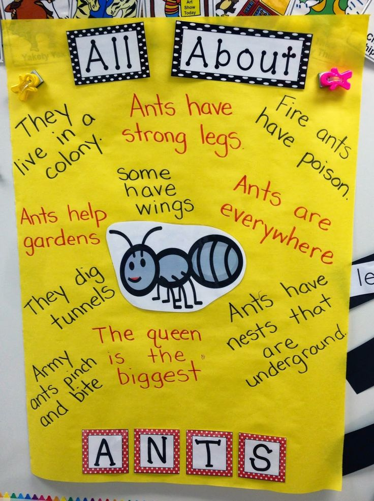 22 Best Images About First Grade Insects On Pinterest