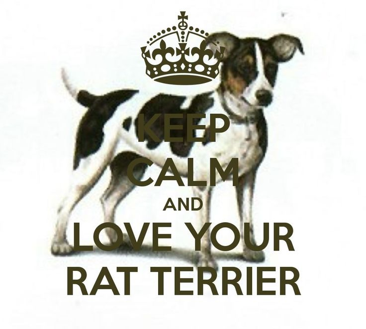 Keep Calm And Love Your Rat Terrier