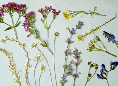 1000 images about flores prensadas on pinterest - Flores artificiales para decorar ...
