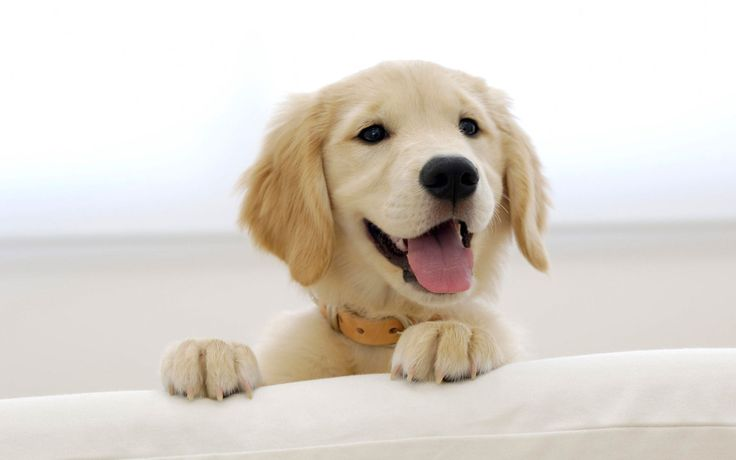 DOG HD WALLPAPER - Google Search