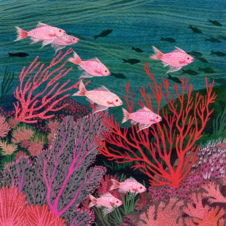 coral reef - becca stadtlander illustration, fish, tropical fish