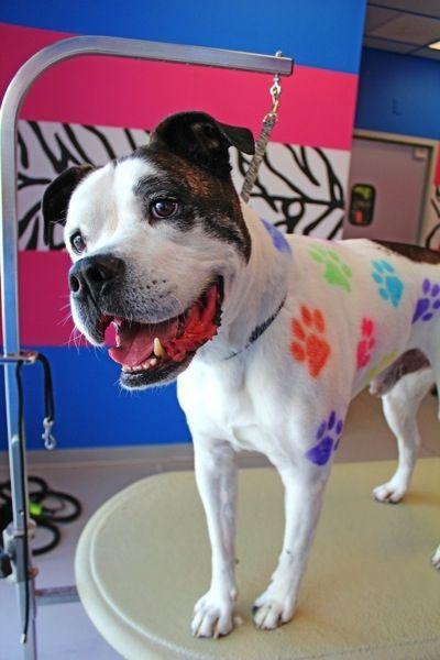 A dog spa with dog hair dye?