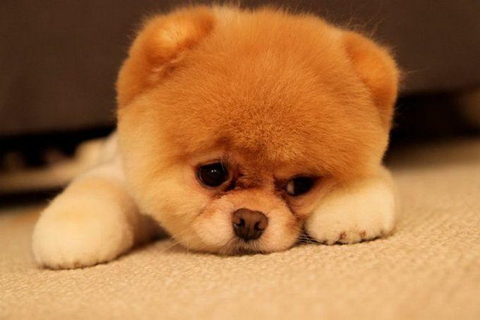 Самый симпатичный щенок oh he is cuutteeee