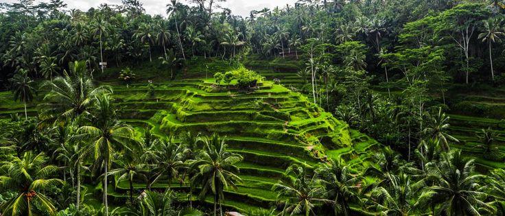 Voyager à Bali : alors que le tourisme de masse s'ancre à Bali, je pars à la recherche de la beauté sur l'île de Dieux en Indonésie, avec récit et photos.