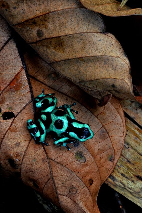 Other things hide to stay alive, but being very highly coloured indicates that you are unafraid so are almost certainly very poisonous as evolution slowly ensured other predators would learn this fact and totally ignore such danger