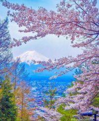 Třešňové květy v Japonsku s Mt Fuji