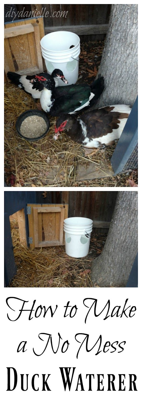 Wondering how to keep muck out of the duck water? Here's our simple solution: A no mess duck waterer.