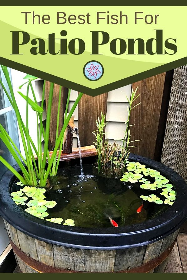 Fish For Container Water Gardens Container Water Gardens In 2020 Patio Pond Container Water Gardens Container Fish Pond