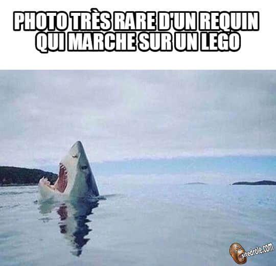 Photo rare d 39 un requin funny funny humor et lol - Requin rigolo ...
