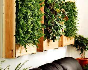 Oltre 1000 idee su piante della camera da letto su - Piante in camera ...