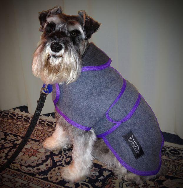 Grey with purple trim