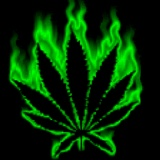 Funny Weed Pictures and Sayings | funny weed sayings graphics and comments