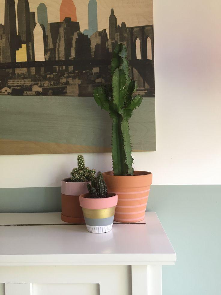 Cactus in terracotta pot.