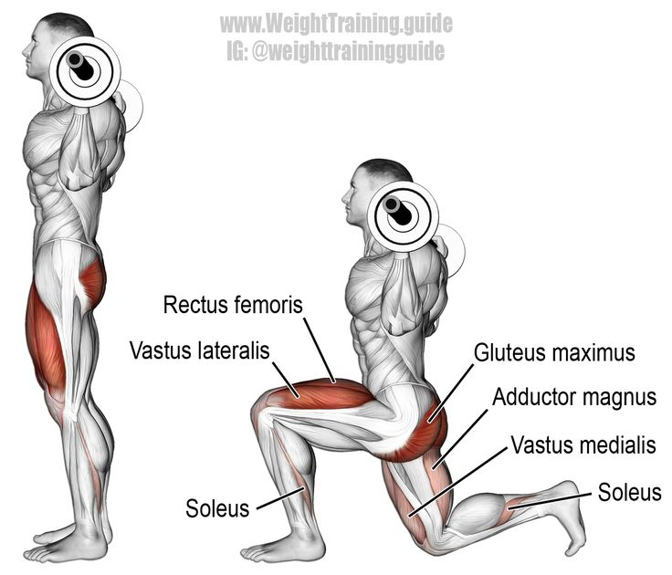 Barbell lunge. Another brilliant compound exercise for developing unilateral lower-body functional strength! Target muscles: Quadriceps (Vastus Lateralis, Vastus Intermedius, Vastus Medialis, Rectus Femoris). Synergists: Gluteus Maximus, Adductor Magnus, and Soleus.