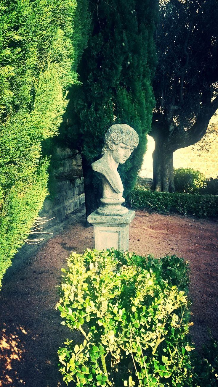 A face in the garden