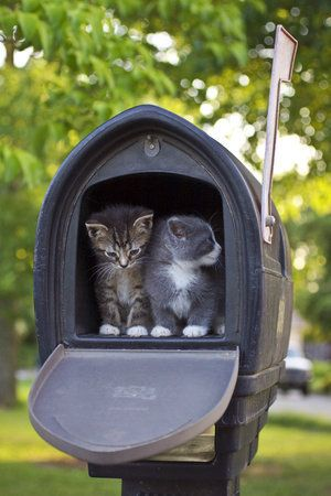 Love it!Dogs Cat, You'V Got Mail, Kittens, Cat House, Special Delivery, Hello Kitty, Mail Boxes, Silly Cat, Animal