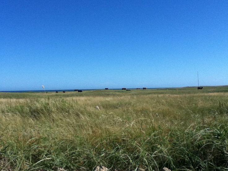 Costa Bonita y vacas en mar. Necochea, Argentina-