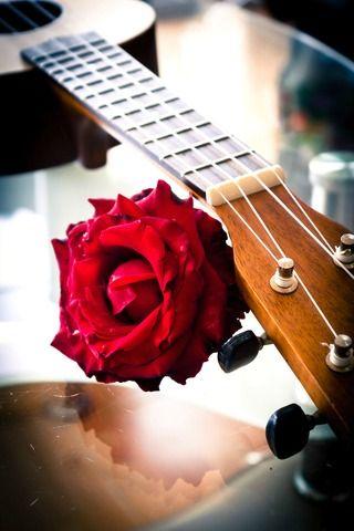 Beautiful Red Rose And Ukulele http://shockts.com/martin-ukulele-for-sale/ #redrose #ukulele