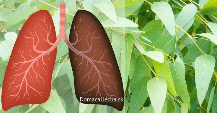 Ak vás nabudúce postihne nádcha, kašeľ či zápal priedušiek, nesiahajte hneď po liekoch. Namiesto nich skúste tieto mocné liečivé bylinky.
